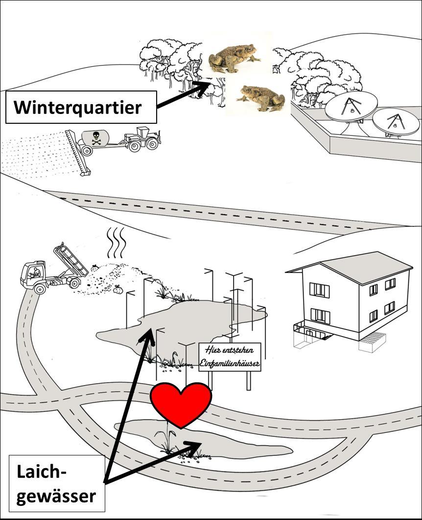 Ökologie I: Landschaftsgenetik mit den Grundlagen der ...