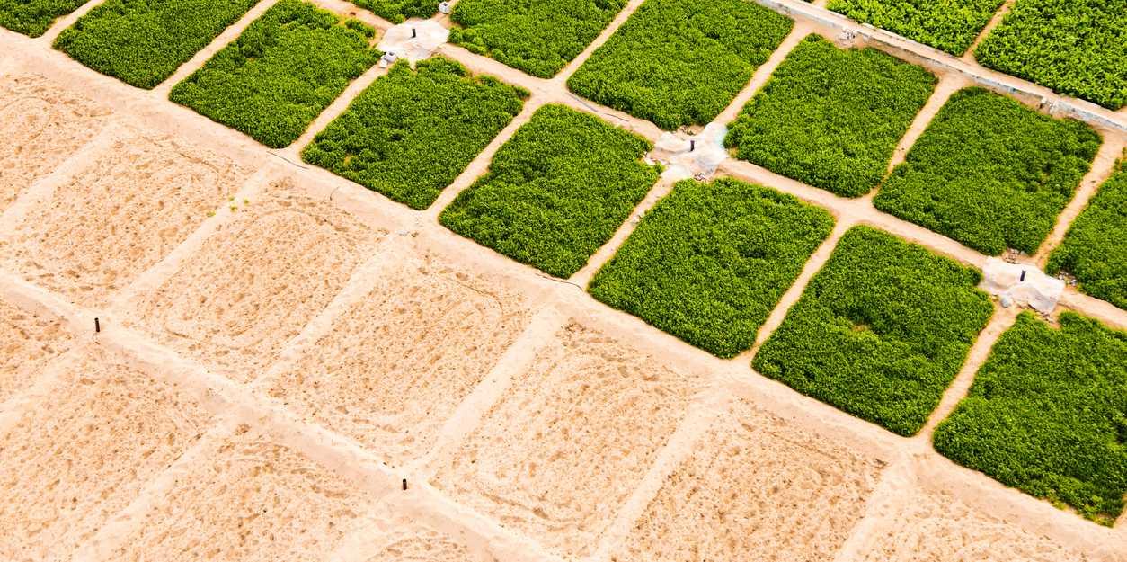 Der kühlende Effekt künstlicher Bewässerung | ETH Zürich