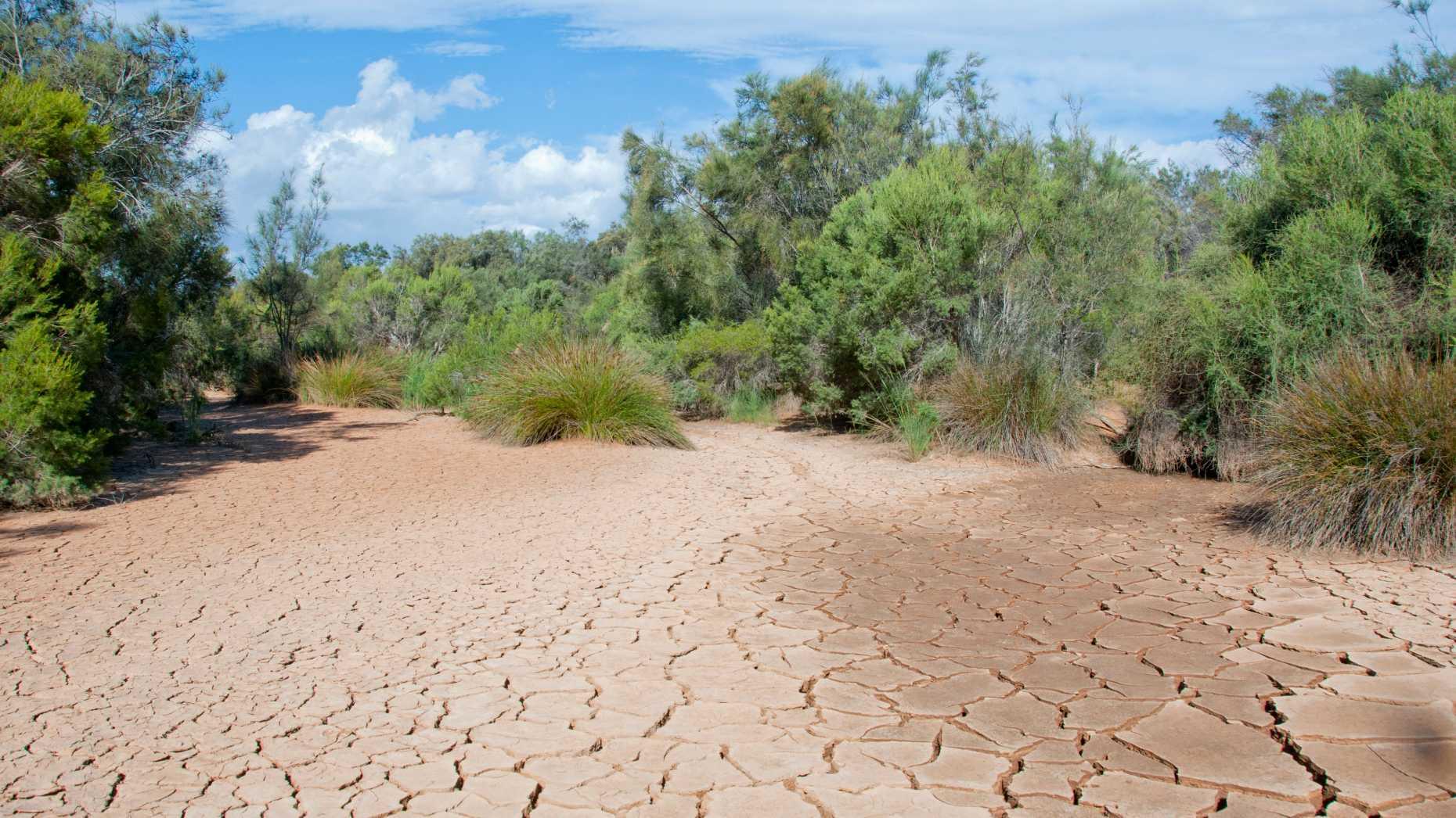 Trockenheit stresst Ökosysteme