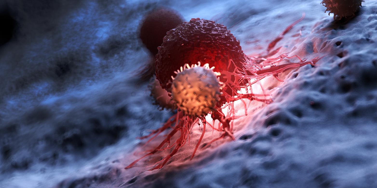 Bei der Krebsimmuntherapie werden körpereigene T-Zellen (vorne) befähigt, gegen Tumorzellen (dunkelrot) vorzugehen und diese zu eliminieren. (Grafik: Shutterstock)