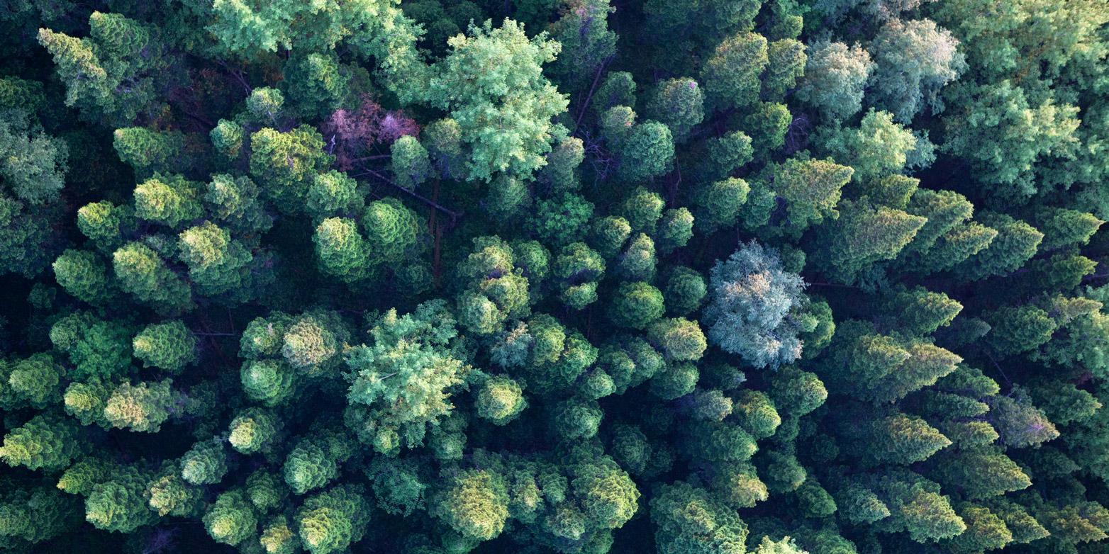 Die Aufforstung von Wäldern wäre die effektivste Massnahme gegen den Klimawandel. (Bild: Vershinin-M / iStock)
