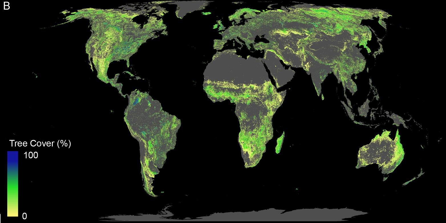 Diese Fläche ist für die Wiederaufforstung von Wäldern verfügbar (ohne bestehende Wälder, Landwirtschaftsflächen, Wüsten und Städte). (Bild: Crowther Lab / ETH Zürich