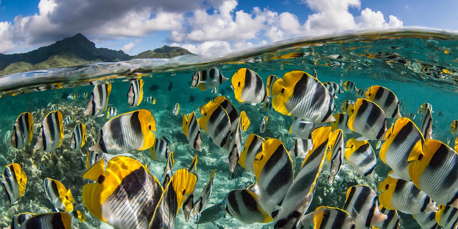 Bunte Vielfalt: Die höchste genetische Diversität bei Fischen ist in den Tropen zu finden. (Bild: iStock)