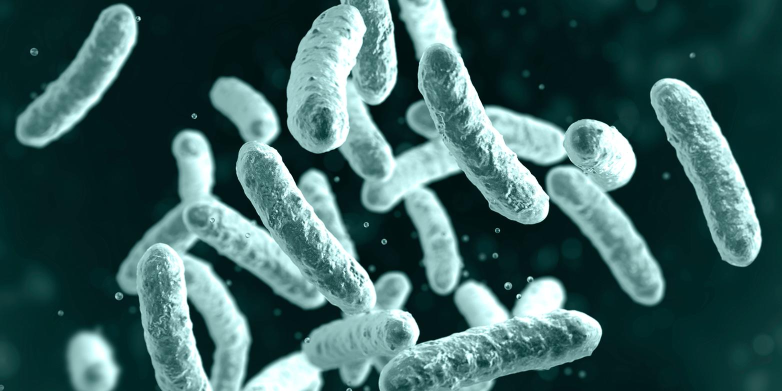 Image Salmonella