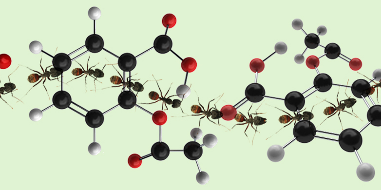 ant trail and molecules
