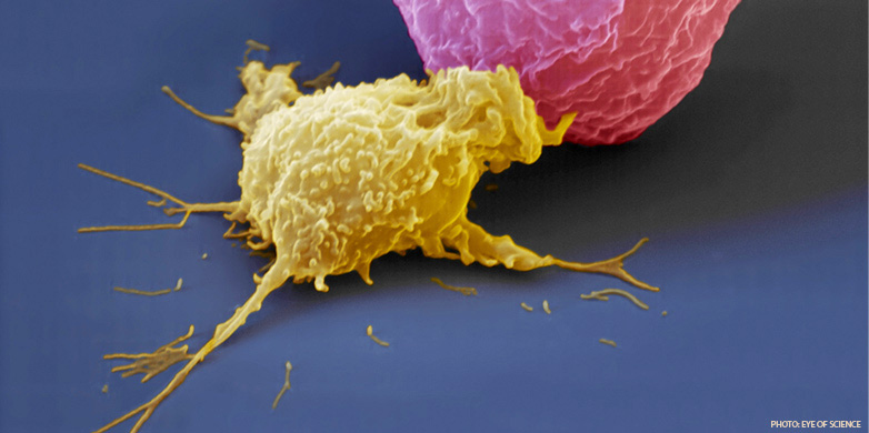 Invisibility cloak for immune cells | ETH Zurich