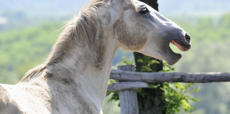 how horses express emotion