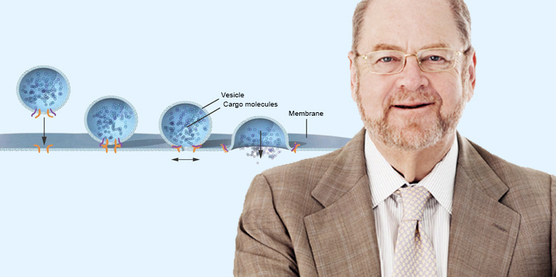 © 2013 The Nobel Committee for Physiology or Medicine / Mattias Karlén