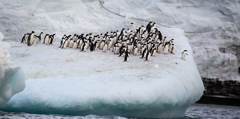 A penguin colony at the foot of Mount Siple.