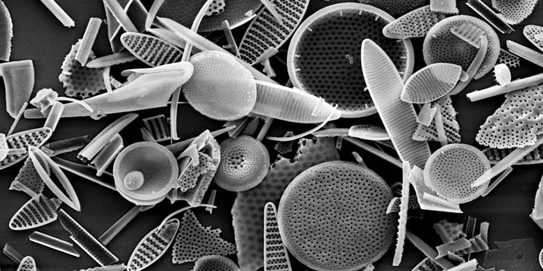 Diatoms from the Southern Ocean, captured by a scanning electron microscope. (photo: Julien Crespin, SEM facility of the Weizmann Institute)