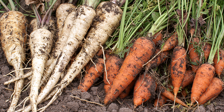 Vegetables and soil