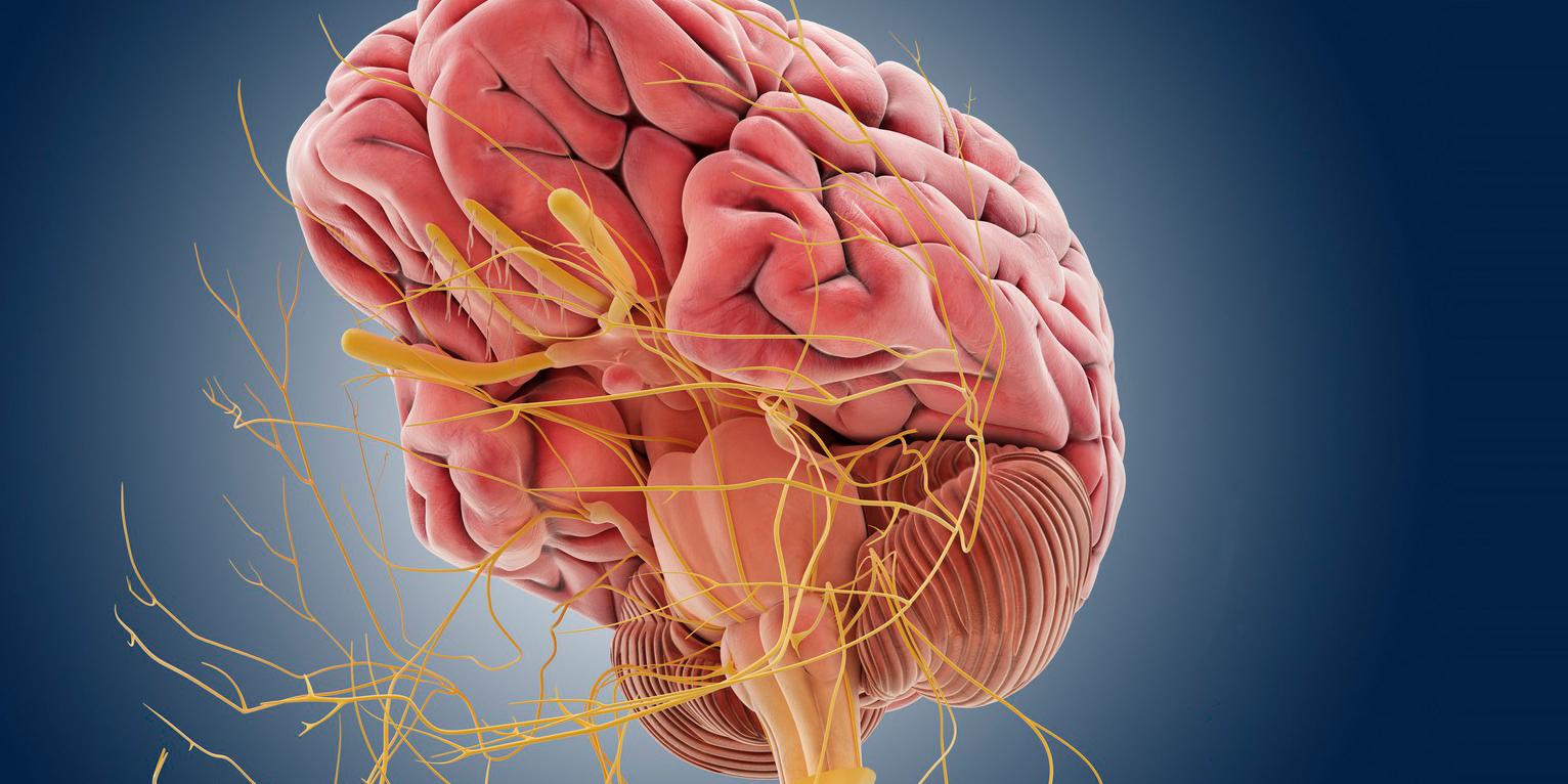 Visualisation: Springer Medizin / Science Photo Library