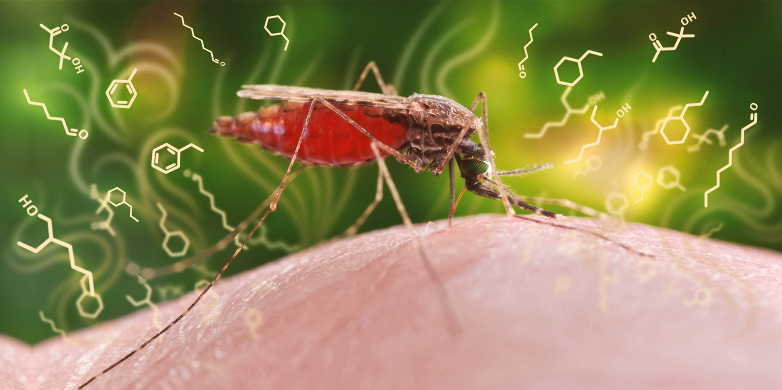 https://www.ethz.ch/en/news-and-events/eth-news/news/2018/05/malaria-detectable-in-olfactory-cocktail/_jcr_content/imageCarousel.imageformat.lightbox.jpg