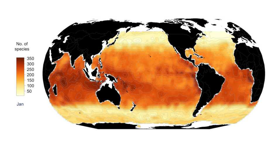 The global distribution of phytoplankton in January. Dark areas indicate a high biodiversity, light areas a low one. The number of species was not determined for the white areas. (Credit: Righetti et al. <em>Science Advances</em>, 2019)