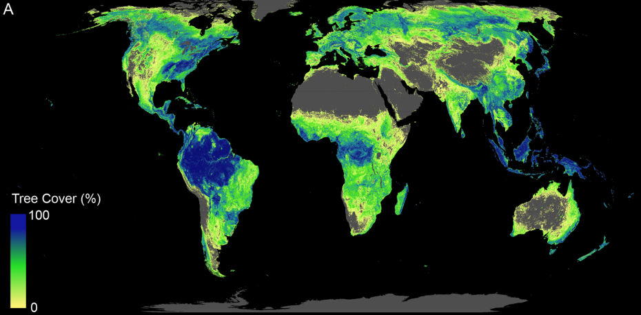world map depicts tree cover
