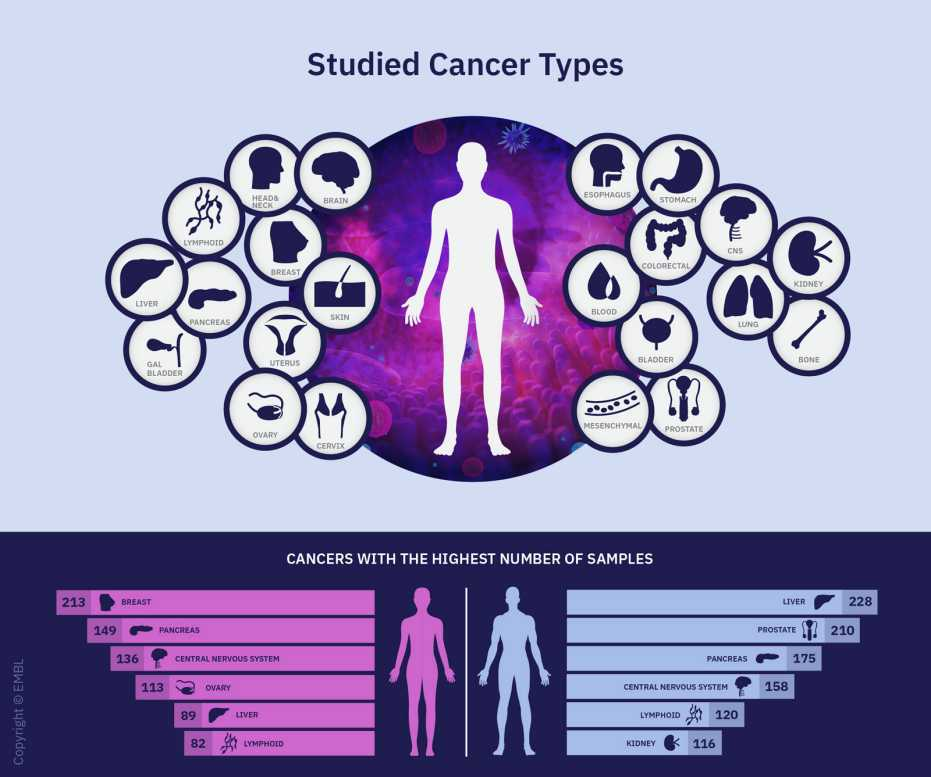 An overview of the different cancer types studied in the Pan-Cancer Project. The lower part also lists the six cancer types (for men and women) for which the most samples were available. (Graphics: Rayne Zaayman-Gallant/EMBL)