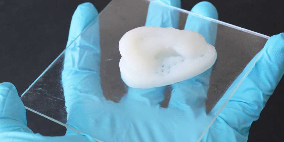 A white 3D-printed ear sits on a clear piece of glass or plastic in a researcher's blue-gloved hand