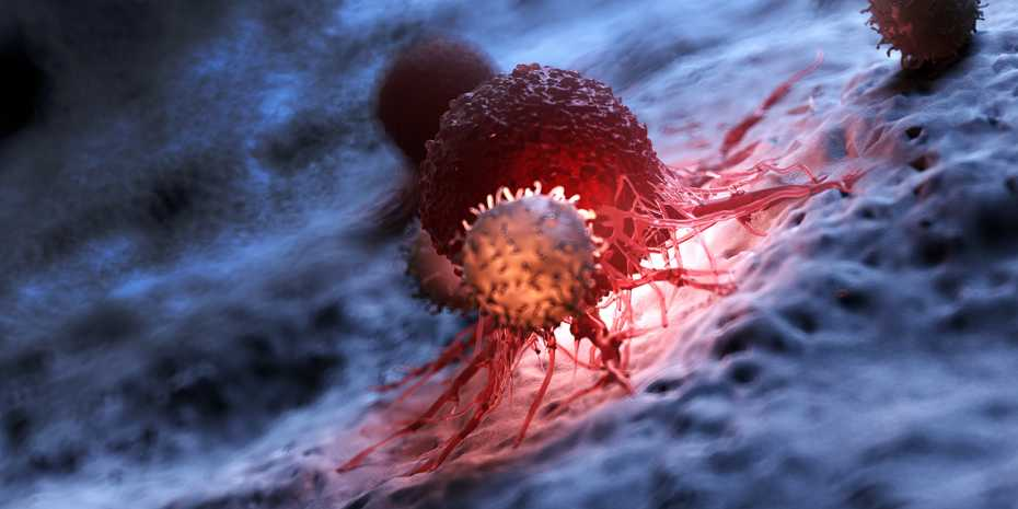 Tumours contain many different cell types. In the foreground is an immune cell and behind it a cancer cell in red. (Visualization: Shutterstock)