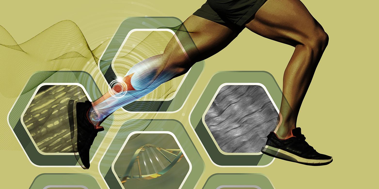 Genetics affects tendon stiffness and athletic performance. (Visualization: ETH Zurich / Viktor Koen)