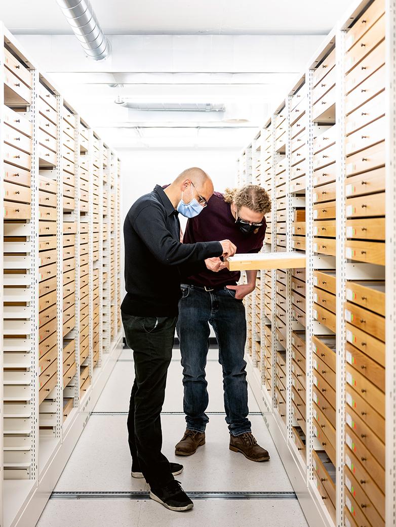 Martin Fischer (left) and Gabriel Ulrich examine the false heath fritillary.