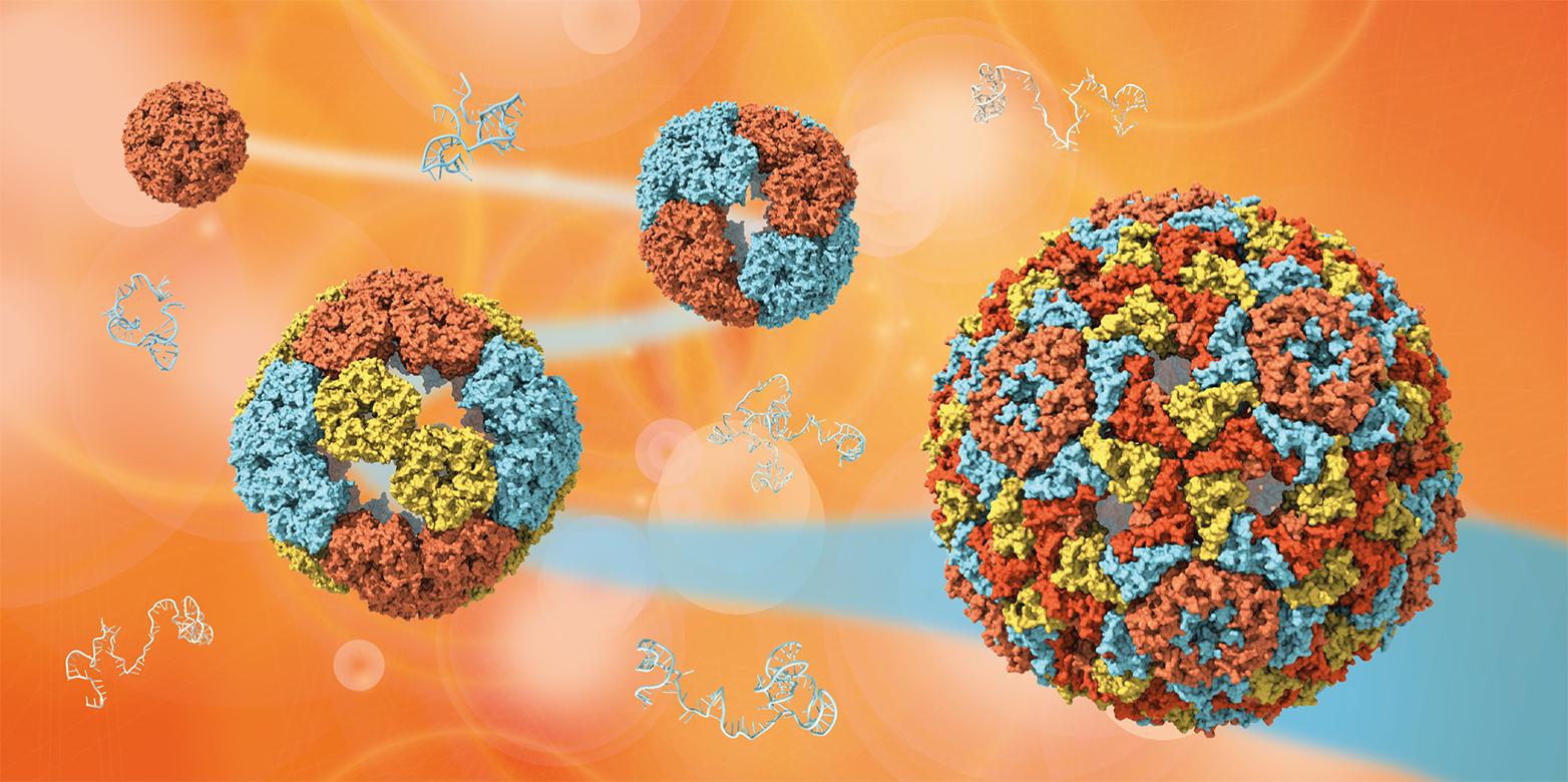 Illustration Viruses